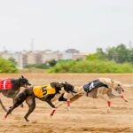 Greyhound races in West Virginia could become a thing of the past