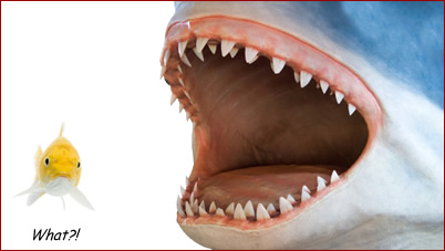No room for sharks as VC Poker goes fishing