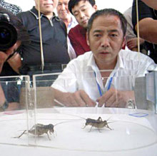Would you bet a million yuan on a cricket?