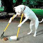 DogScoop