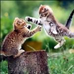 KittenFight