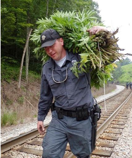 policeman, marijuana haul
