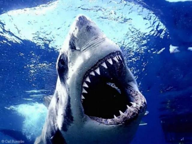 Sharks Circling Illinois Video Gambling Waters
