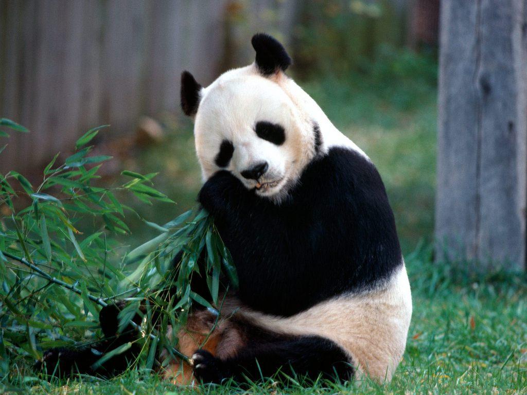Google's Farmer and Panda Changes, Moving Forward