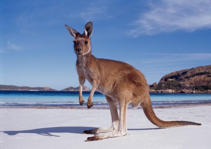 australia-regulation