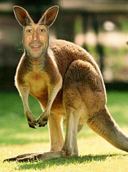 Aaron kangaroo