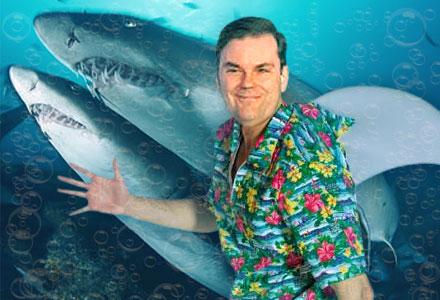 dan-stewart-sharks