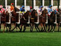 horseracing levy row