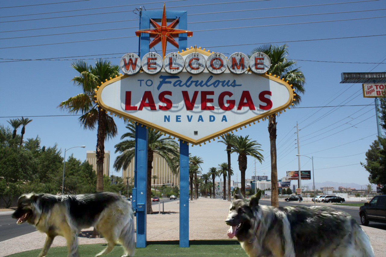 Vegas visitors and occupancy up