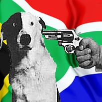south-africa-greyhound-racing