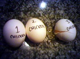 count your chickens small