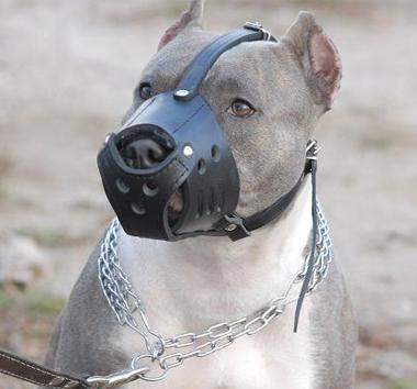 Philippine authorities nab eight Koreans for running dog-fighting operation