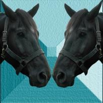horse-racing-news