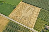 mario crops