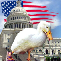 US online poker advocates steel themselves for do or die lame duck fight