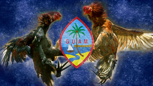 guam-mayor-wants-cockfighting-to-be-excluded-from-gambling-ban
