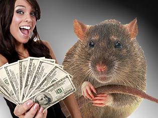rats-problem-gambling