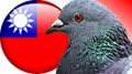 Taiwan busts online sports bet ring as PETA urges end to pigeon race fixing