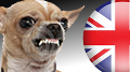 uk-bookmakers-watchdog-thumb