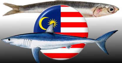malaysia-gambling-sharks-anchovies