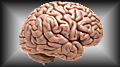Brain study offers more evidence that problem gamblers are born that way