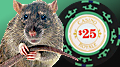 Flashing lights and sounds cause rat gamblers to make riskier choices
