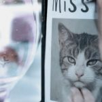 National Lottery under fire over 'heartless' missing cat ad campaign