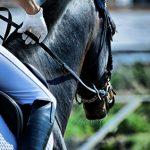 Macau's horse racing revenue loss gallops to $11M in 2015
