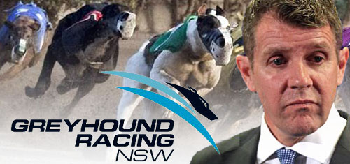 new-south-wales-greyhound-racing-ban-lifted