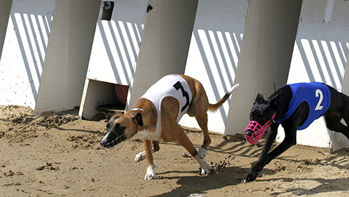 SIS and Tabcorp herald new UK greyhound partnership after flying start