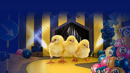 HATCH OF THE DAY: GalaBingo.com hosts live lottery game featuring hatching chicken eggs