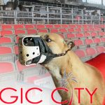 Florida allows first dog track to 'decouple' from racing, keep slots