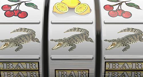 crocodile-gambling-study-ig-nobel-prize