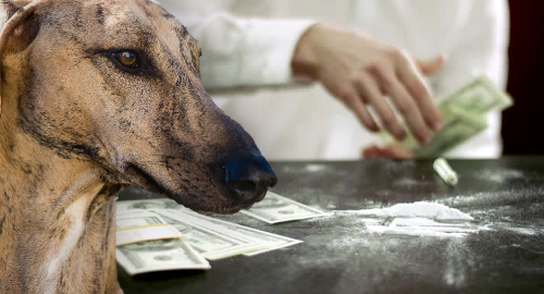 florida-greyhound-cocaine