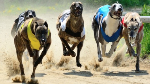 SIS to launch new greyhound channel
