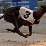 Nissi Online Casino adds dogs betting