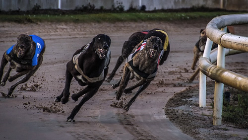 Florida doesn't want to answer greyhound ban challenge