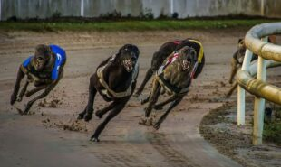 floridas-greyhound-races-unlikely-to-return-anytime-soon