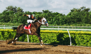 tiz-the-law-highlights-belmont-stakes-odds
