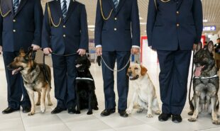 mans-best-friend-is-sniffing-out-covid-19-in-airports