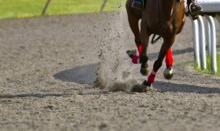 tiz-the-law-clear-favorite-on-kentucky-derby-odds