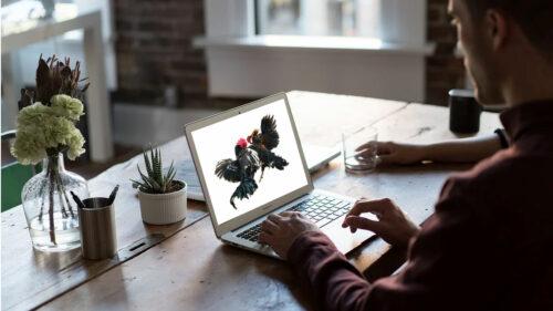 Cockfight online