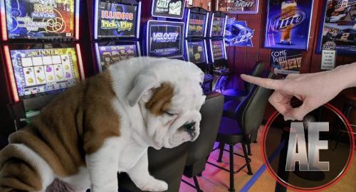 Bulldog sports betting joelmir betting da rede bandeirantes blogfa