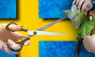 sweden-online-gambling-market-report